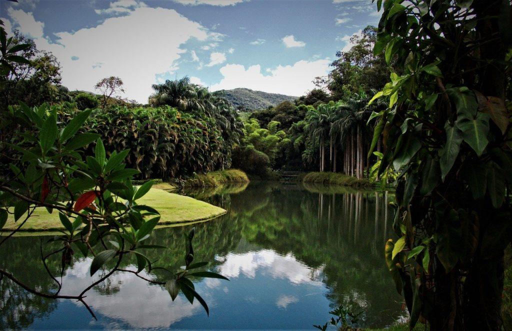 Em Minas Gerais, o Instituto Inhotim está entre os lugares com mais flores do país