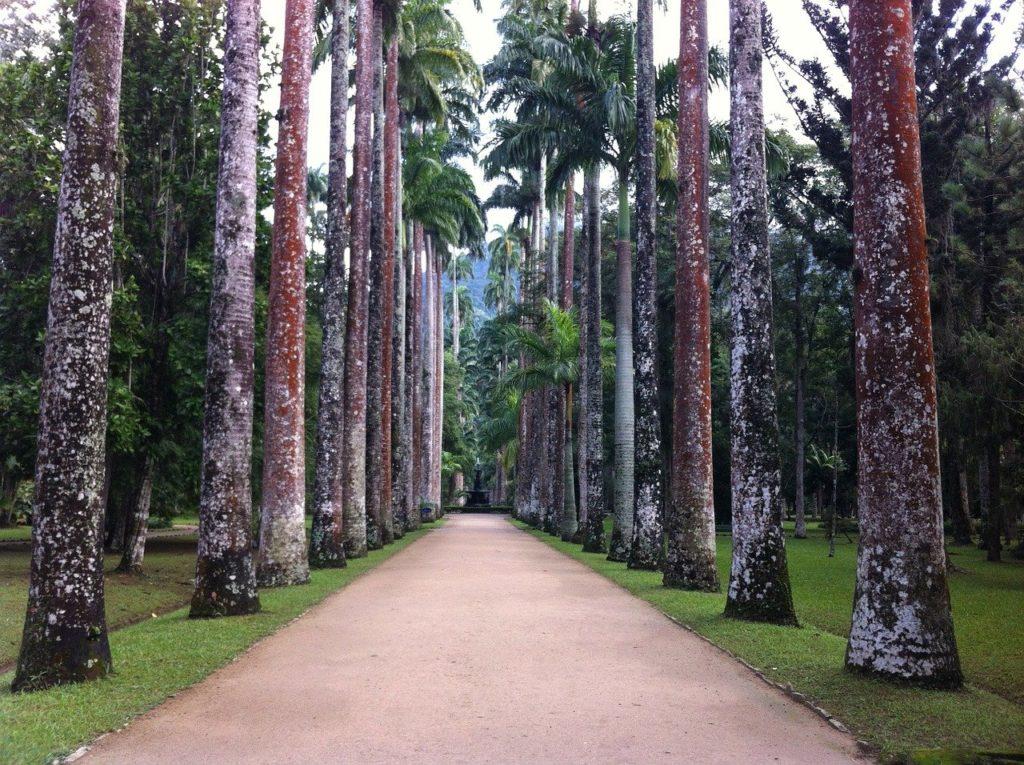 Um dos locais mais floridos do país é o Jardim Botânico do Rio de Janeiro.