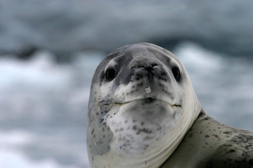 Animais polares e muito gelo. É isso o que se vê quando se viaja para a Antártica.