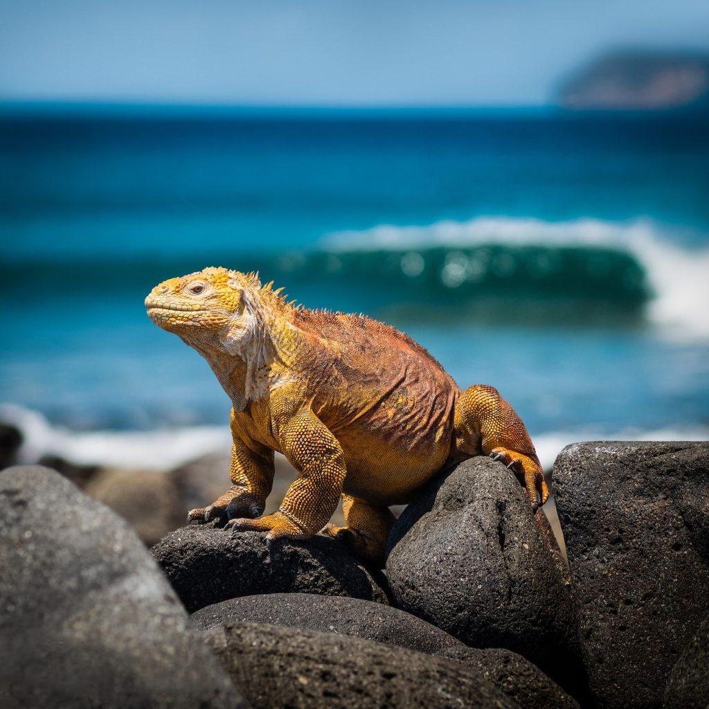 Galápagos é outro destino para um detox digital