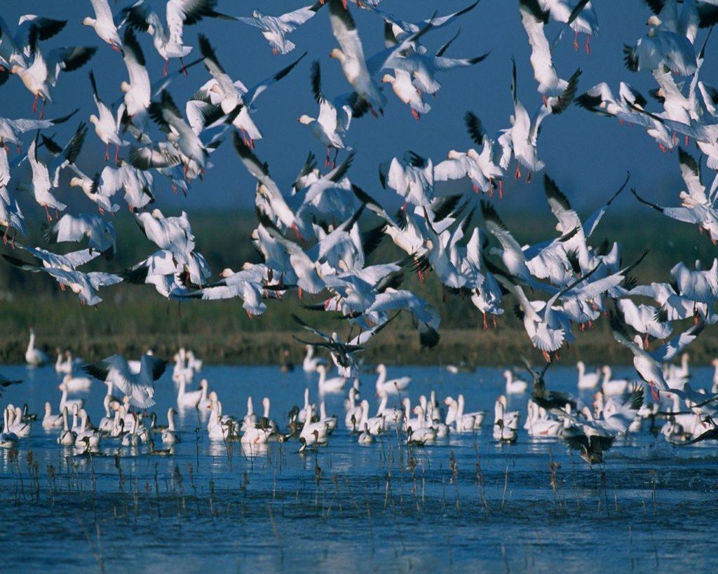 No Pantanal você se livrará das redes sociais por um período