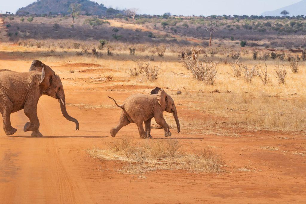 Fazer um safári na África é um dos melhores destinos para uma viagem exclusiva