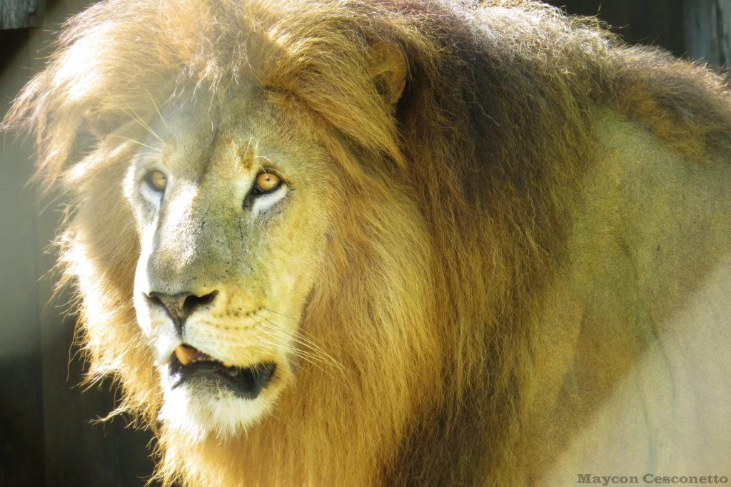 O Zoológico da Santur existe desde 1981 em Balneário Camboriú