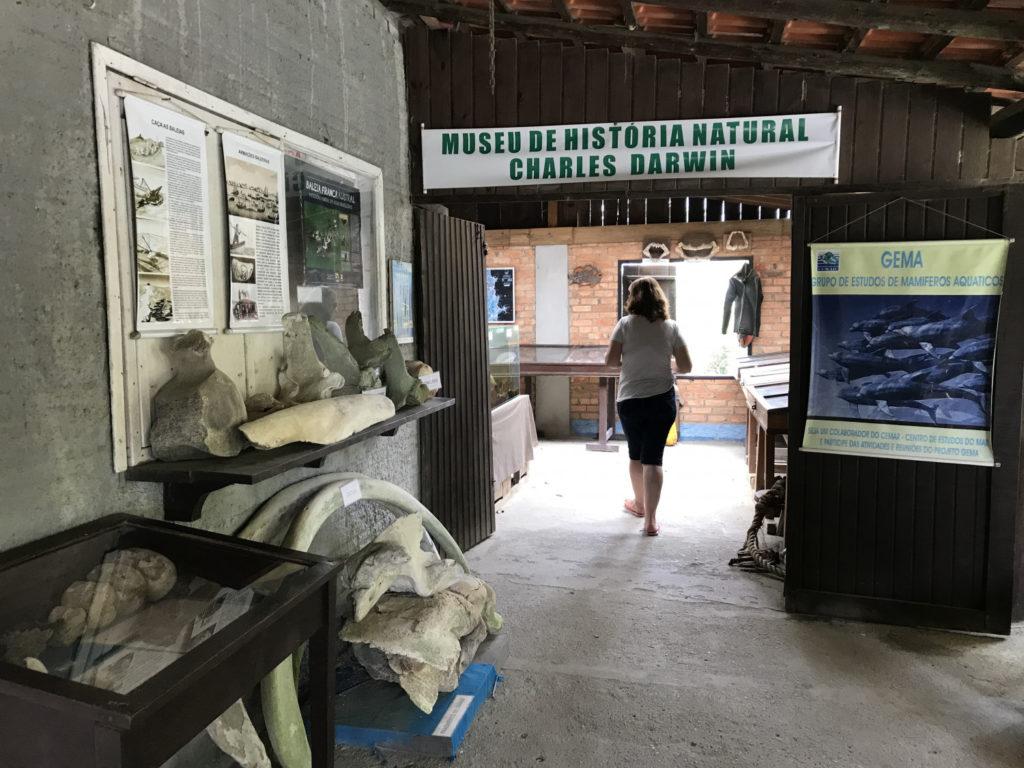 O Museu de História Natural revela as teorias de Darwin em Bombinhas
