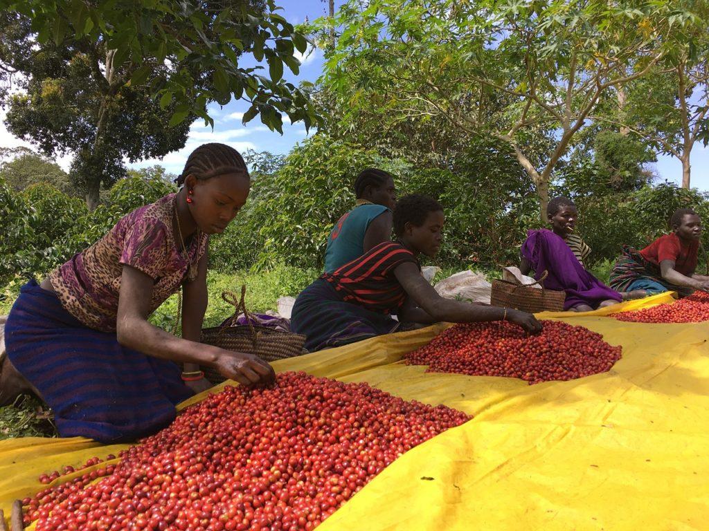 O café etíope é um dos melhores do mundo. E a relação café x hospitalidade é forte no país.