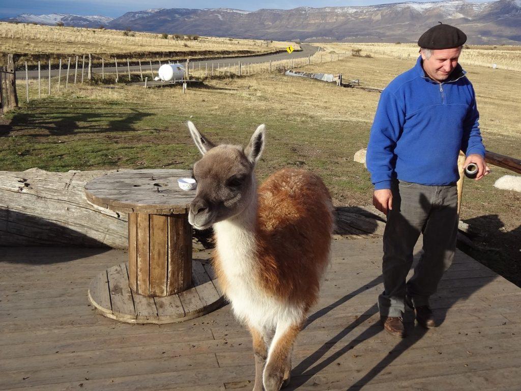 O clima gelado faz El Calafate ter uma fauna própria