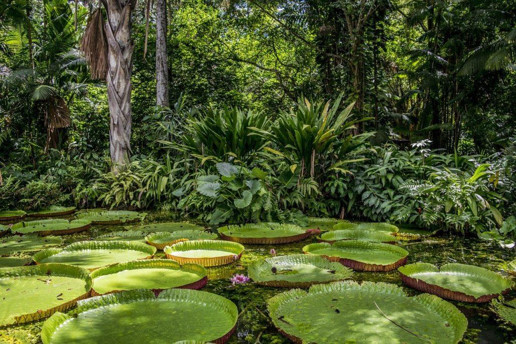 Com tanta beleza e mistério, a Amazônia também está entre os mais belos locais do país