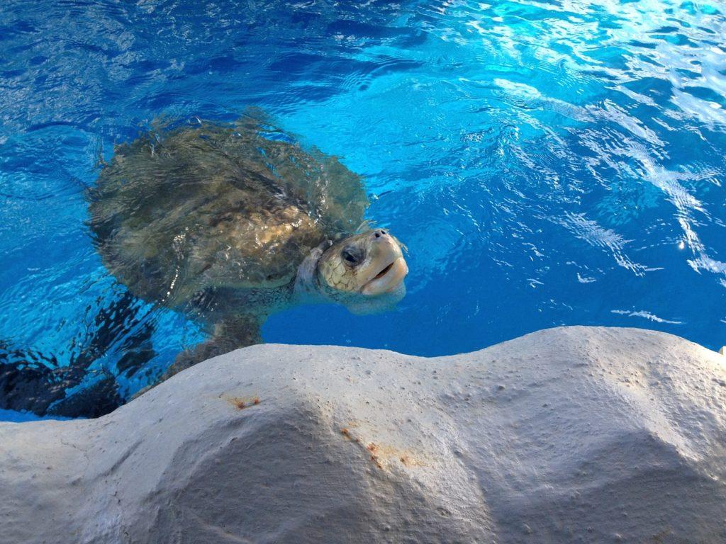 O Oceanário é famoso e está na lista do que fazer em Aracaju em Sergipe
