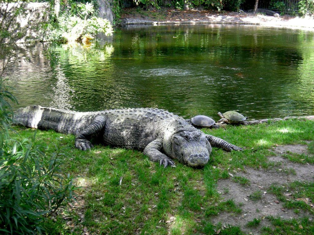 O Busch Gartens é o mais antigo parque da Flórida nos Estados Unidos