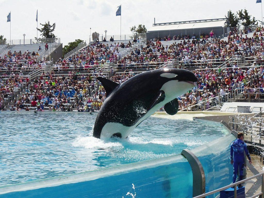 O Sealworld é o parque de Orlando que mais divide opiniões