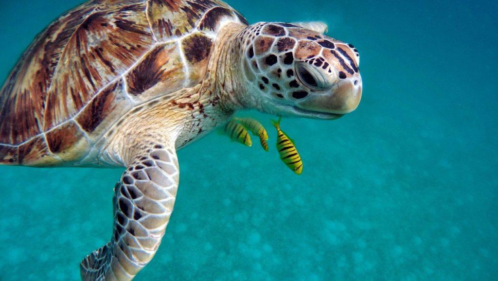 Estar nas Maldivas é vivenciar e experimentar a cultura, a natureza e os nativos