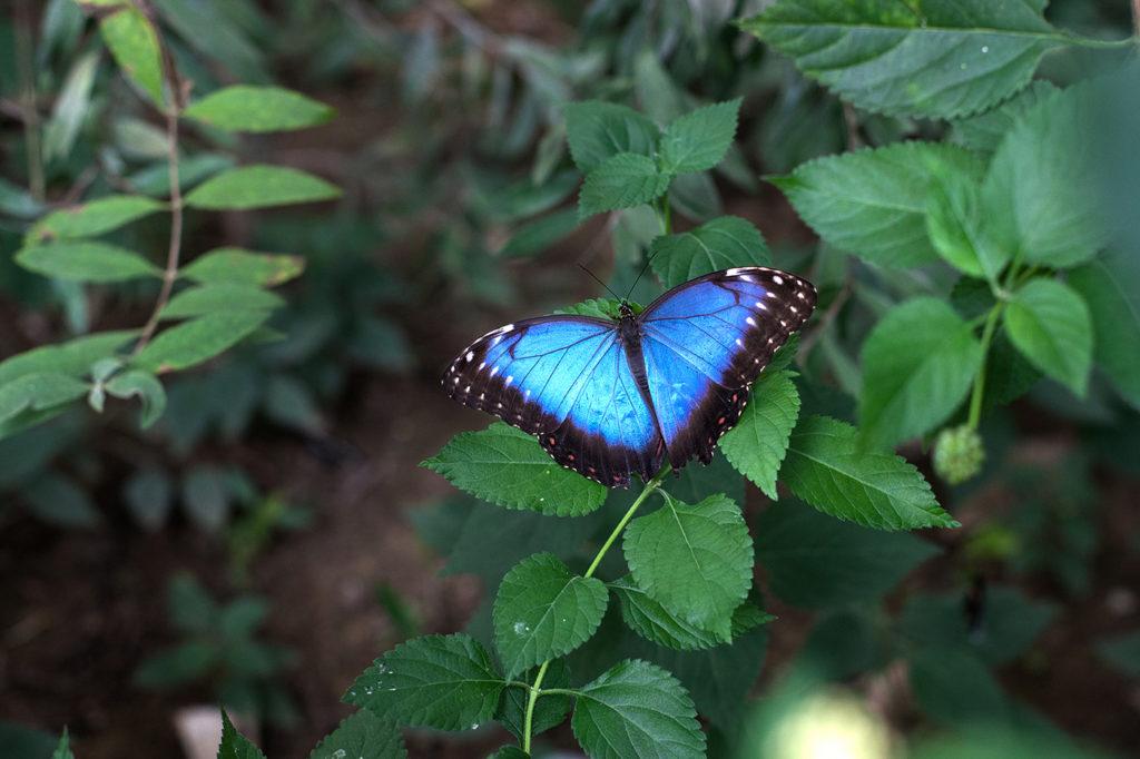 Outra possibilidade sem Istambul é conhecer a fazenda de borboletas
