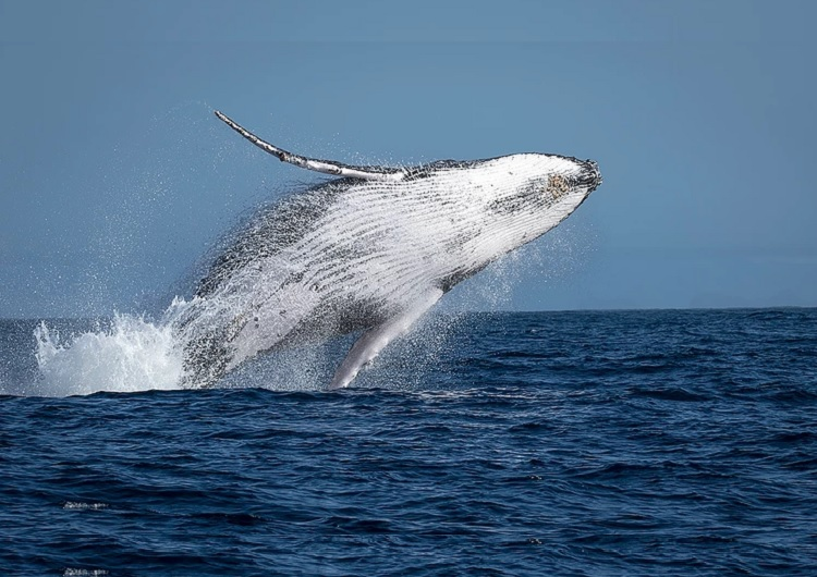 As baleias também circulam por esta região e dependendo da época, você poderá ver as baleias em Vitória