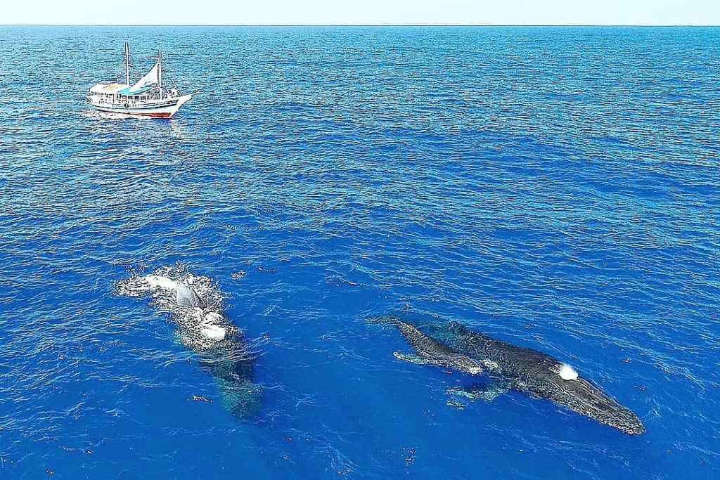 As baleias são gigantes que podem chegar até 60 toneladas