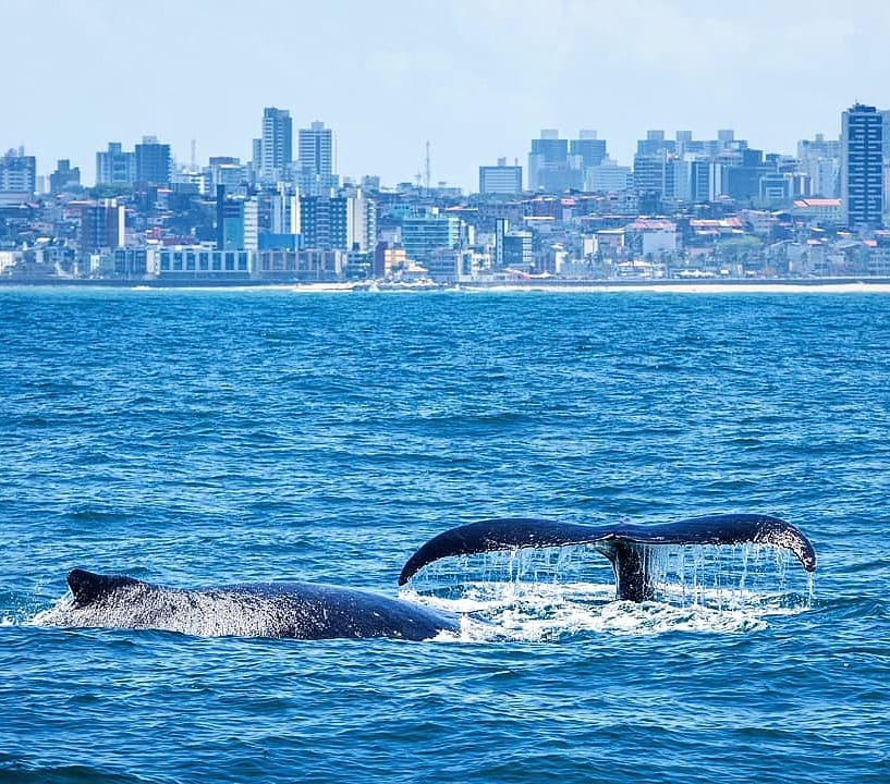 Salvador tem registro de observação de baleias