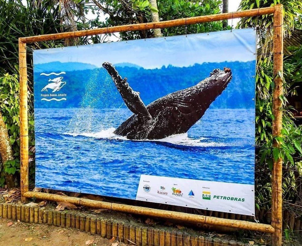 Na Bahia o projeto é forte e serve de conservação e conscientização sobre a importância das baleias jubarte