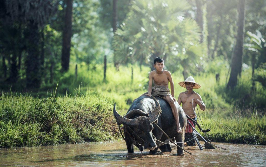 Itália, Índia e Indonésia na rota do filme Comer, Rezar e Amar