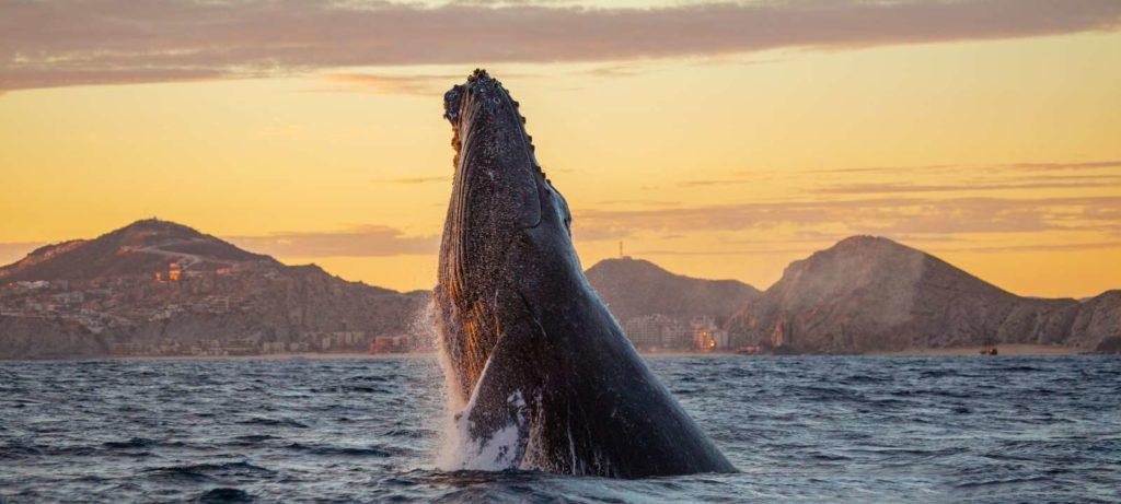 A região é famosa por ser berçário de baleias