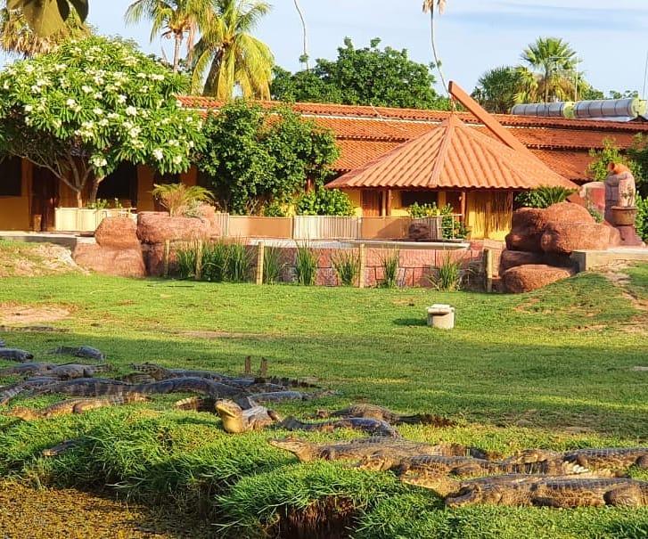 No Pantanal o outono é a estação da seca e da possibilidade de ver ainda mais animais