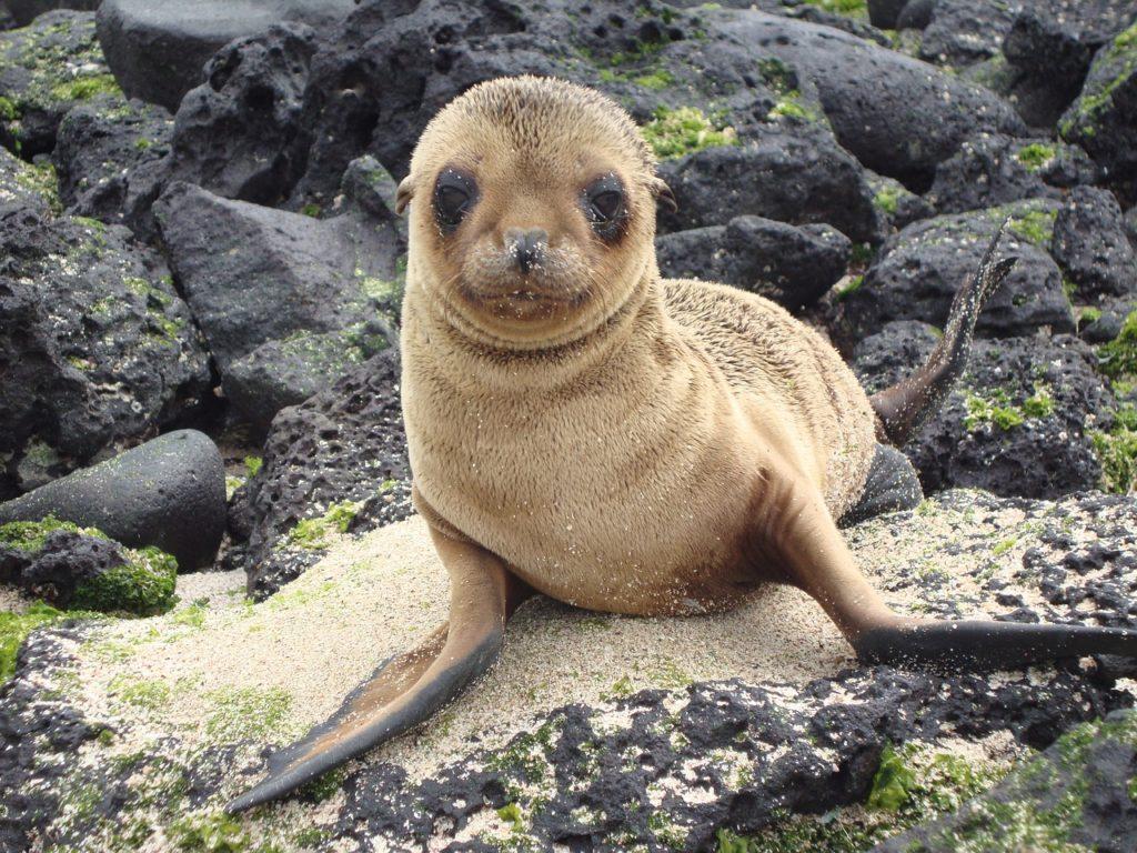 Onde se situam as Ilhas Galápagos e qual sua origem?