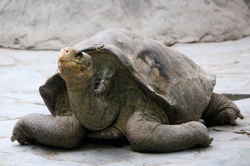 Galápagos tem importante contribuição ao meio ambiente mundial