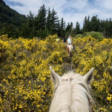 Passeio a cavalo pela Reserva Natural de San Lorenzo também entre os 5 programas diferentes na Argentina