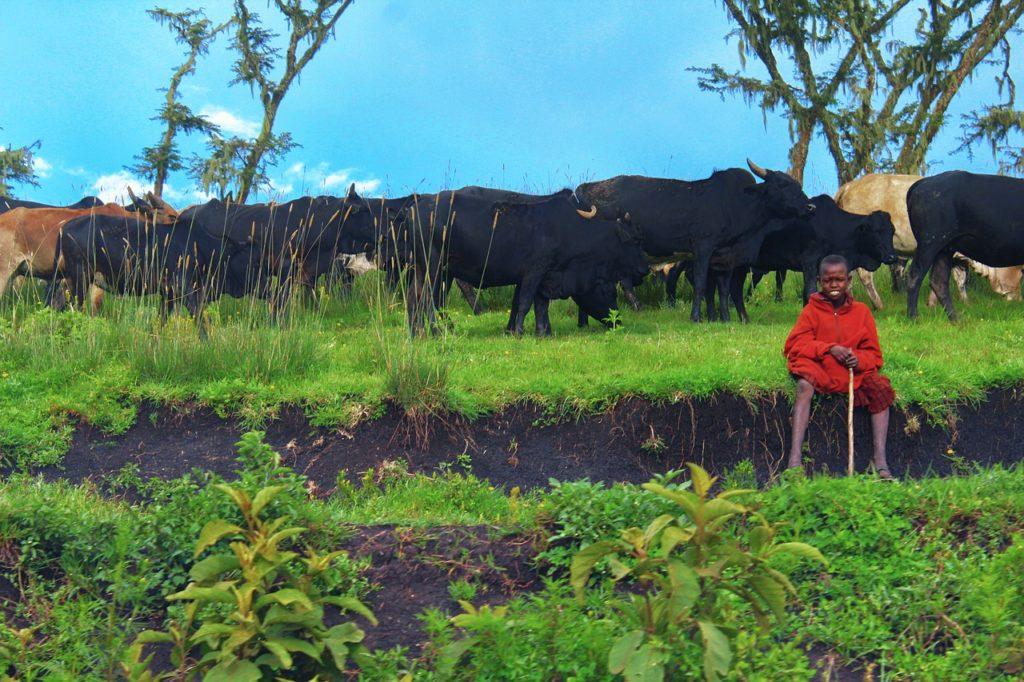 Cratera Ngorongoro da Tanzânia possui o clima ideal da África