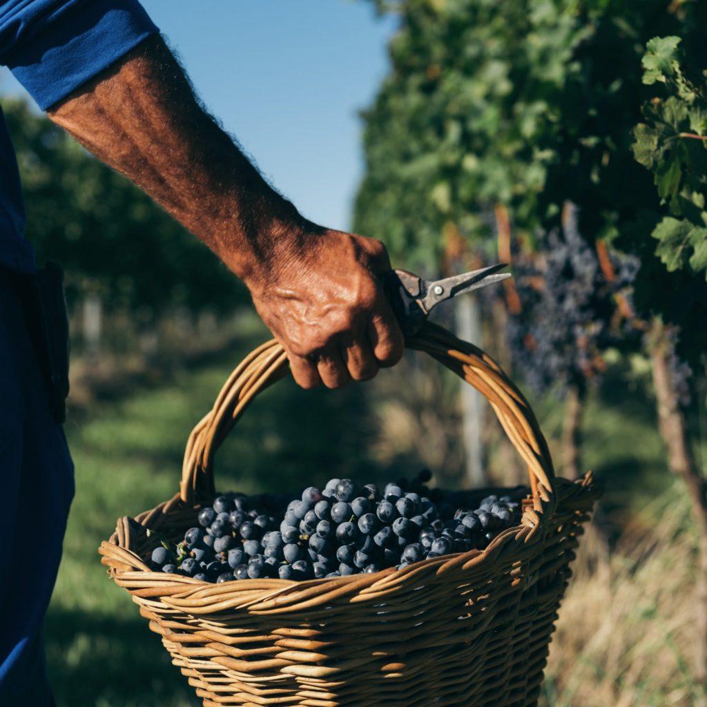 Quais as 5 fazendas de uva mais antigas do Brasil?