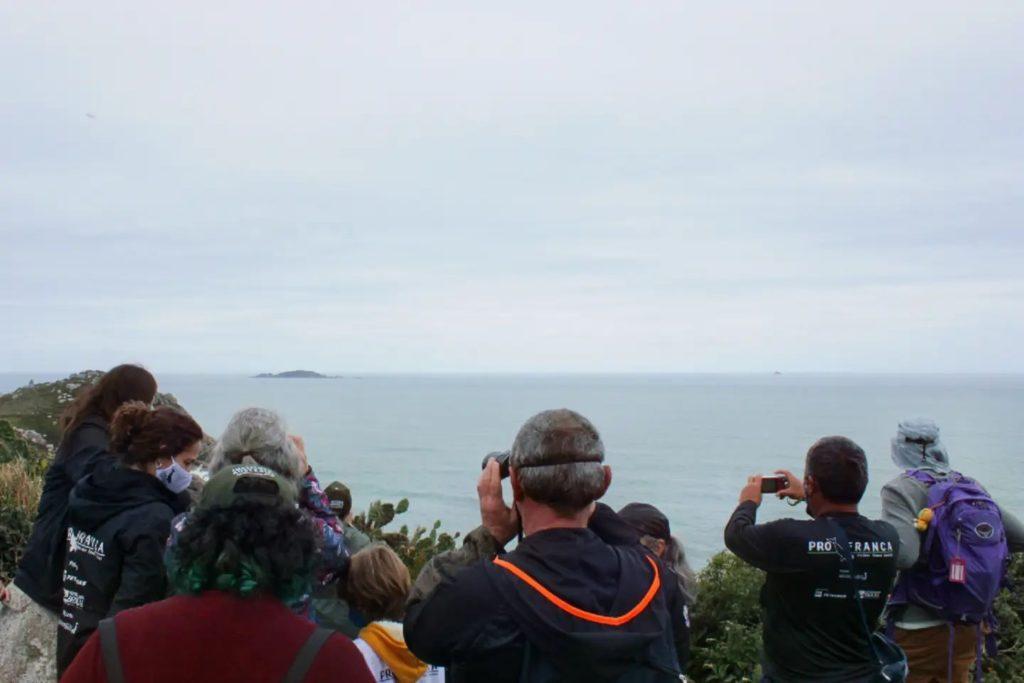 Como ver as baleias em Santa Catarina e qual a melhor época?