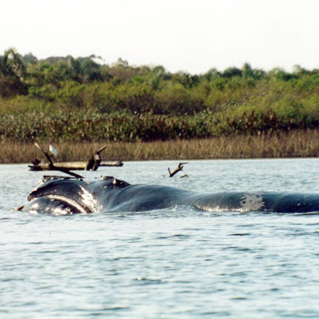 Fotos: www.baleiafranca.org.br