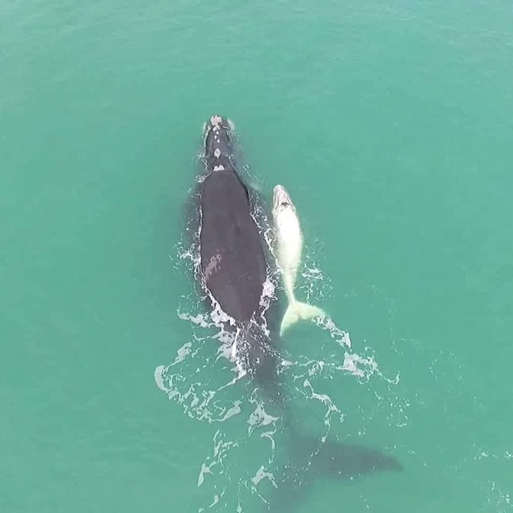 Em quais praias e como ver baleias em Santa Catarina?