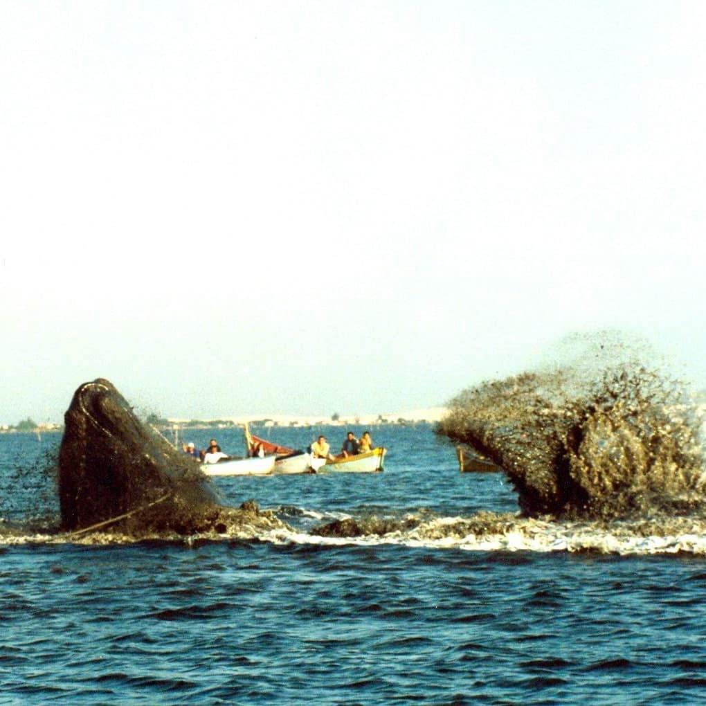 O que fazer nas regiões onde as baleias aparecem?