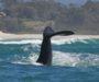 Como ver baleias em Santa Catarina?
