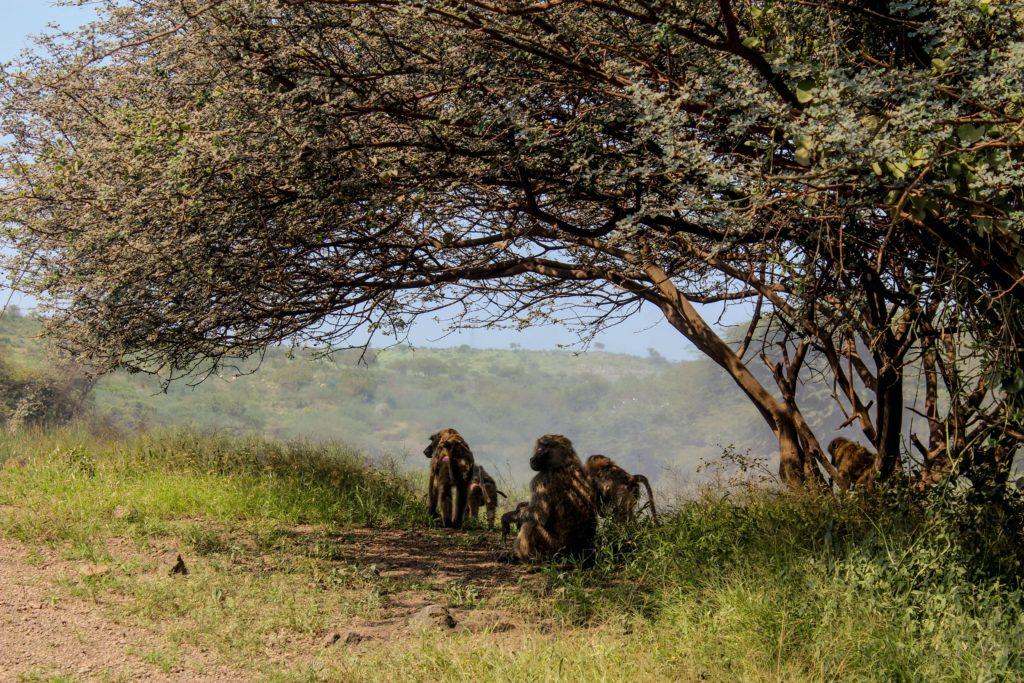 No país africano é possível fazer atividades de ecoturismo e turismo de aventura